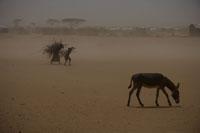 8949e6fabc UNICEF verstärkt Hilfe für die Kinder am Horn von Afrika